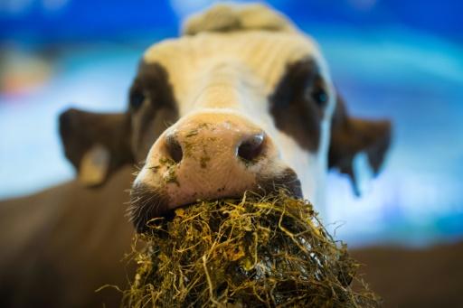 Au salon de l'agriculture, le monde paysan espère se réconcilier avec l'opinion publique