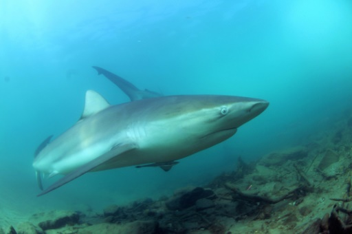 Avec l'hiver s'ouvre la saison des requins sur les rivages de Terre sainte