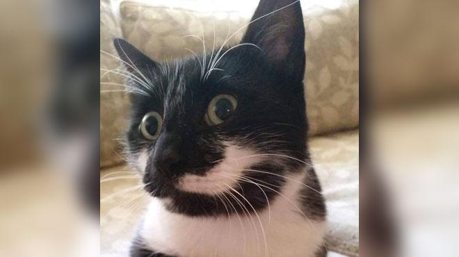 Bassie est introuvable depuis son retour de Turquie: le chat a disparu à sa descente de l'avion, l'avez-vous vu?