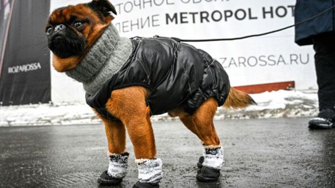 Prévisions météo: couvrez-vous, les températures ne vont cesser de CHUTER