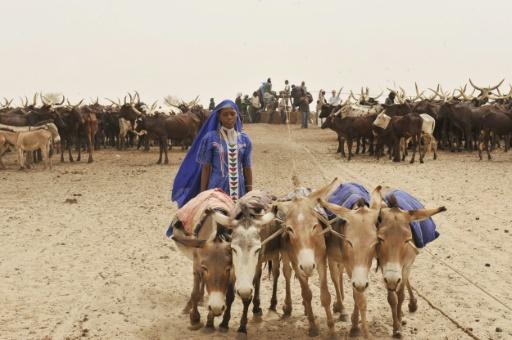 Niger: l'angine du cheval a tué 4.000 ânes depuis décembre 2018