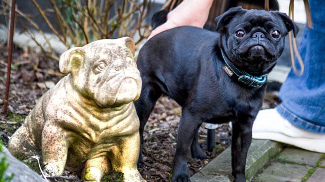 Allemagne: une famille endettée? Sa chienne est saisie et vendue sur eBay