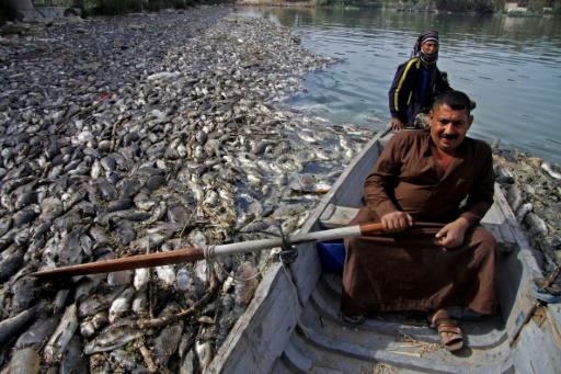 Le virus de l'herpès responsable de la mort de millions de carpes en Irak (ONU)