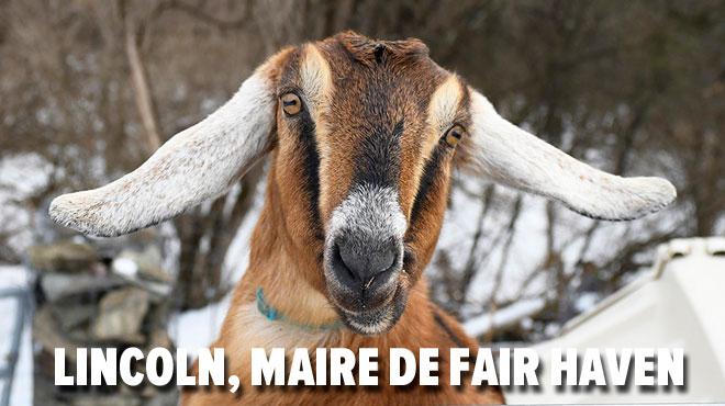 Les habitants de Fair Haven aux USA ont élu une chèvre comme nouveau maire (photos)