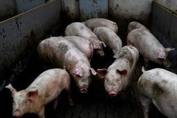 Gaia relance sa campagne pour inscrire le bien-être animal dans la Constitution