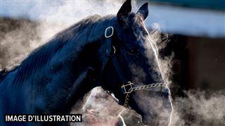 Eliza, 14 ans, a été trainée sur 500 mètres par Mango, son cheval, à Vedrin- elle n'a pas survécu 4