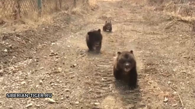 Mignon: 3 oursons sauvés d'une mort certaine après que leur mère ait été tuée par des braconniers