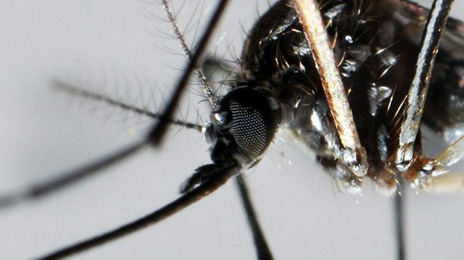 Vers un répulsif quasi infaillible contre les moustiques? Des chercheurs identifient un gène recherché depuis les années 1960