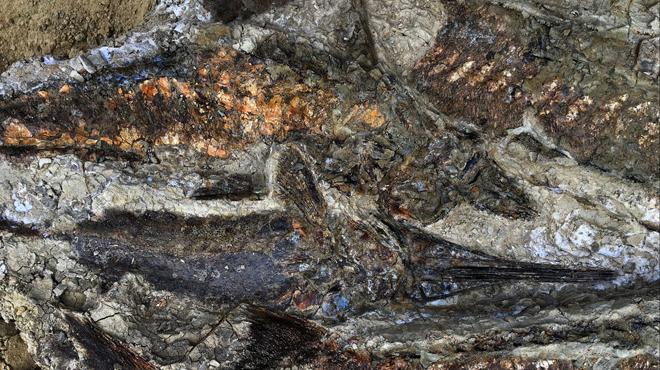 Des fossiles du jour où un astéroïde a frappé la Terre découverts aux Etats-Unis (photos)