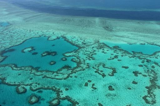 Le réchauffement ralentit le rétablissement de la Grande barrière de corail