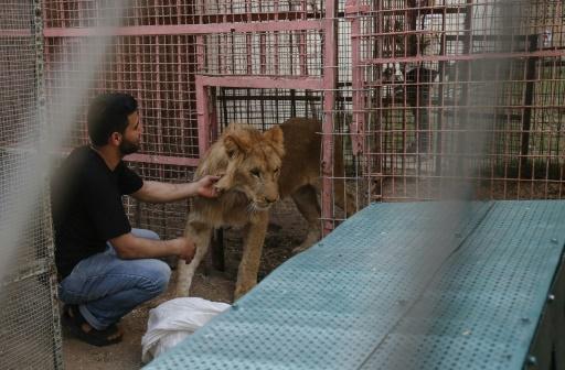Plus de 40 animaux évacués d'un zoo de la bande de Gaza vers la Jordanie (ONG)