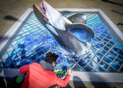Sous pression, la Russie promet de libérer des dizaines d'orques et bélugas