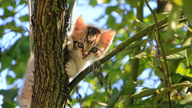 Pour sa santé et la vôtre, évitez de laisser sortir votre chat