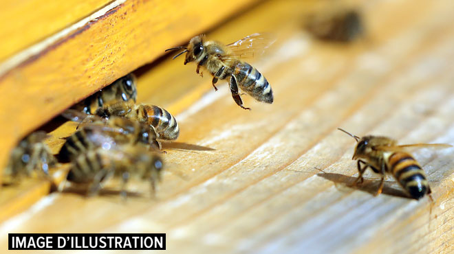 17h07 Les abeilles de Notre-Dame sont sauvées