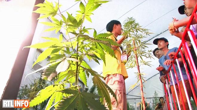 La Thaïlande organise son premier festival dédié au... cannabis