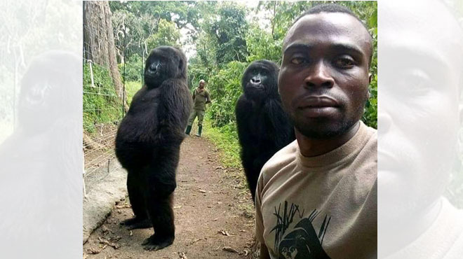 Son incroyable selfie avec des gorilles en RDC fait le tour du monde (photo)