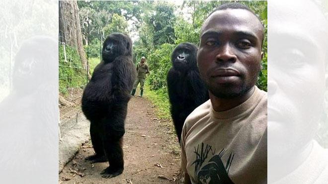 Son incroyable selfie avec des gorilles a fait le tour du monde: Mathieu raconte l'histoire derrière la photo