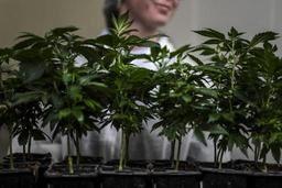 Mise en demeure de légaliser le cannabis thérapeutique, Mme De Block défend son bilan