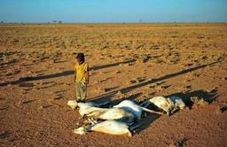 Des millions de personnes manquent de nourriture à cause de la sécheresse en Somalie