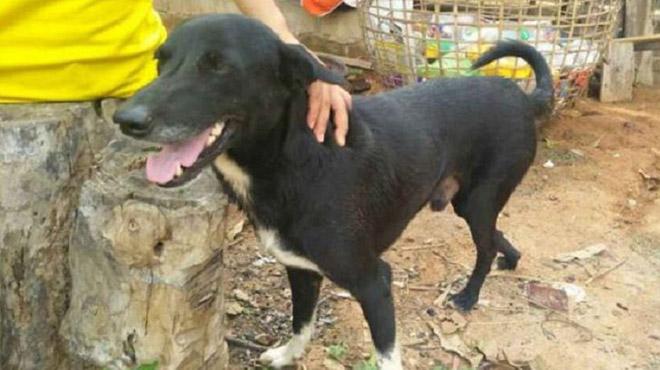 Un chien sauve un nouveau-né enterré sous des détritus par sa mère en Thaïlande (vidéo)