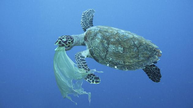 sac-plastique-tortue