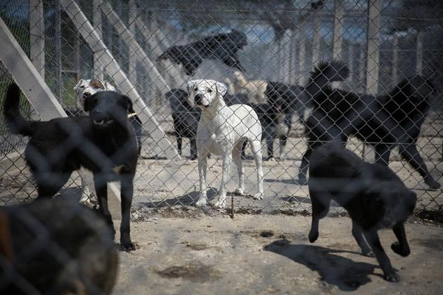 prison-serbie-chien-2