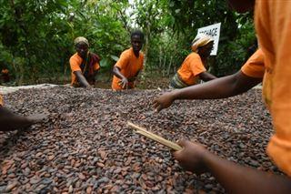 Cacao- Ghana et Côte d'Ivoire suspendent leurs ventes