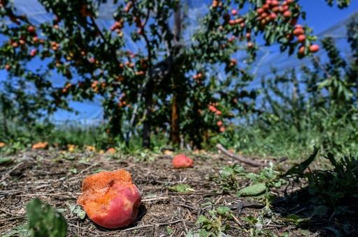Intempéries en Rhône-Alpes: l'agriculture