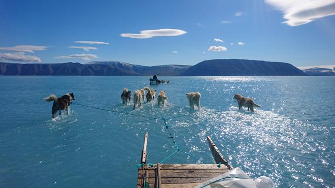 Des chiens de traîneau marchent sur l'eau: l'INCROYABLE photo qui illustre le changement climatique