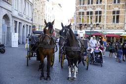 La Ville de Bruxelles suspend la circulation des calèches durant la canicule