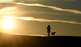Canicule, un mot qui a du chien