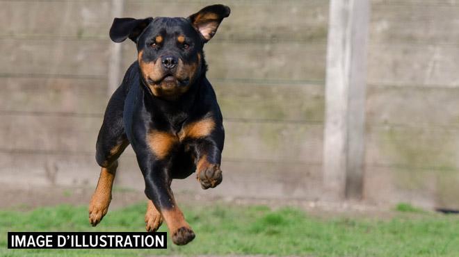 Ses chiens ont mordu des sportifs à Morlanwelz: Claudio condamné à payer une amende