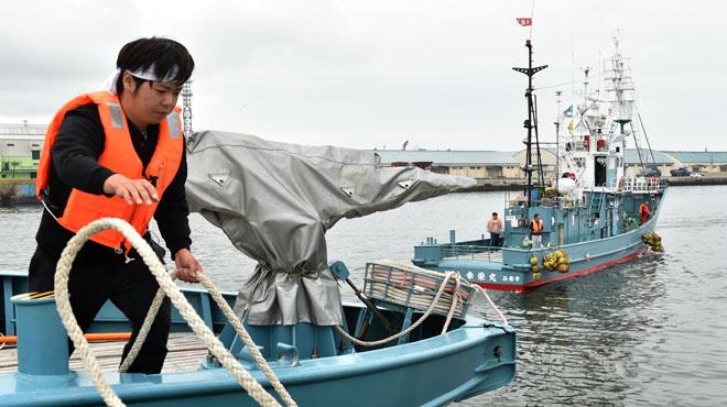 Le Japon reprend la chasse à la baleine après 30 ans d'arrêt