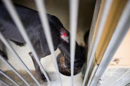 Maxi Zoo rappelle la nourriture pour chien