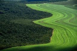 Une solution possible au réchauffement climatique: planter beaucoup d'arbres