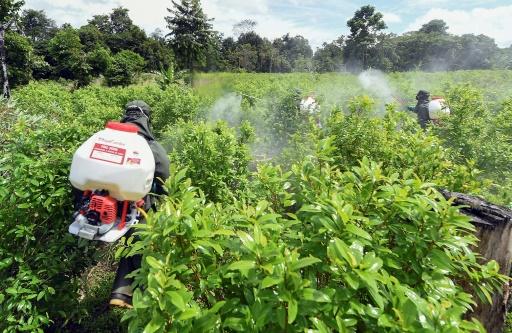 Factcheck: incohérences des chiffres d'éradication des narco-plantations en Colombie