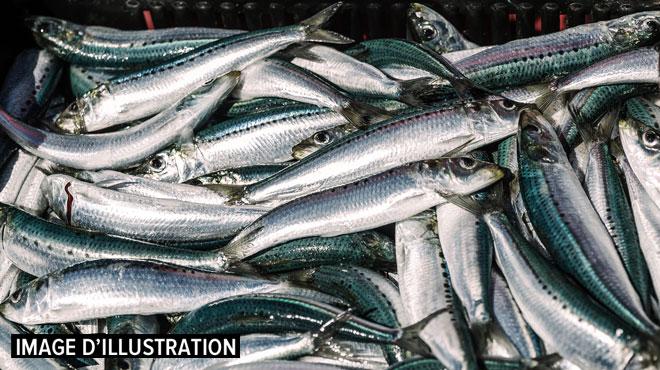 Nous sommes début juillet et l'Europe a déjà épuisé ses ressources de poisson pour 2019, selon WWF