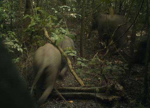 Commerce de l'ivoire: la France dénonce les