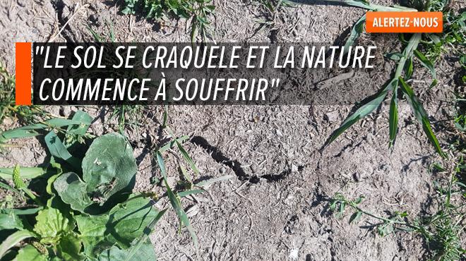La sécheresse est bel et bien là et touche tout le pays: les agriculteurs ne cachent pas leur angoisse