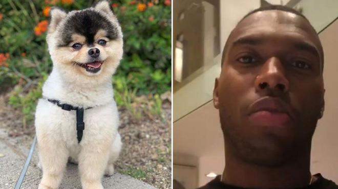 Daniel Sturridge inconsolable après le vol de son chien: