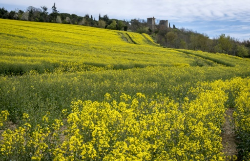 Soja, pois et colza: toujours plus de protéines végétales dans les rayons