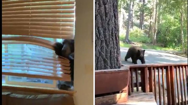 Un ours tente de s'introduire dans une maison aux États-Unis: