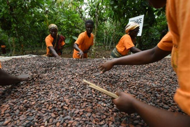 Cacao- Ghana et Côte d'Ivoire lèvent la suspension de leurs ventes