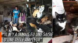 Une soixantaine de chats abandonnés dans une maison à Mettet- Vous imaginez, c'était le chaos (photos) 2