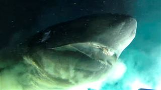 WAOUW, C'EST UN MONSTRE- ce requin préhistorique repéré au large des côtes de la Floride fait frémir ces chercheurs (vidéo) 5