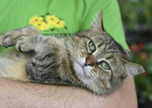 New York, premier Etat américain à interdire le dégriffage des chats