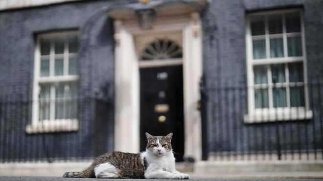 Le futur Premier ministre britannique se fait déjà voler la vedette par… Larry The Cat: voici la véritable star du 10 Downing Street