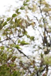 Planter 6 millions d'arbres pour faire face à la canicule