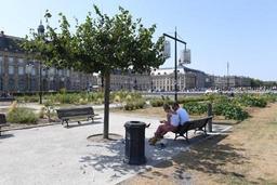 Planter des arbres en ville? Une idée séduisante, qui laisse parfois sceptique