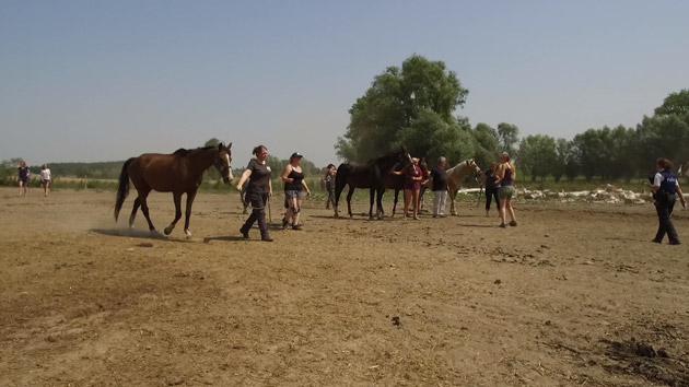 saisie-chevaux-630b